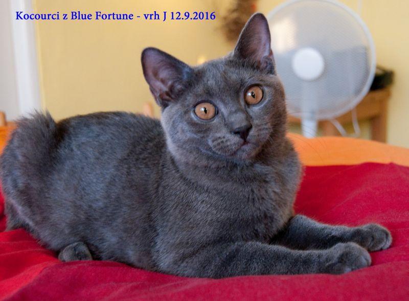 Focení na Blue Fortune 12.9.2016: Kocourek Jáchym z Blue Fortune rew (přezdívaný angrešt...)