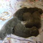 Koťátka jsou na světě pět dnů...