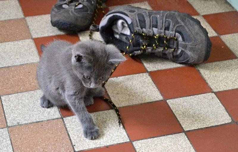 Vrh K  3.9.2016 Reuščiko koťátko si hraje na Blue Fortune.