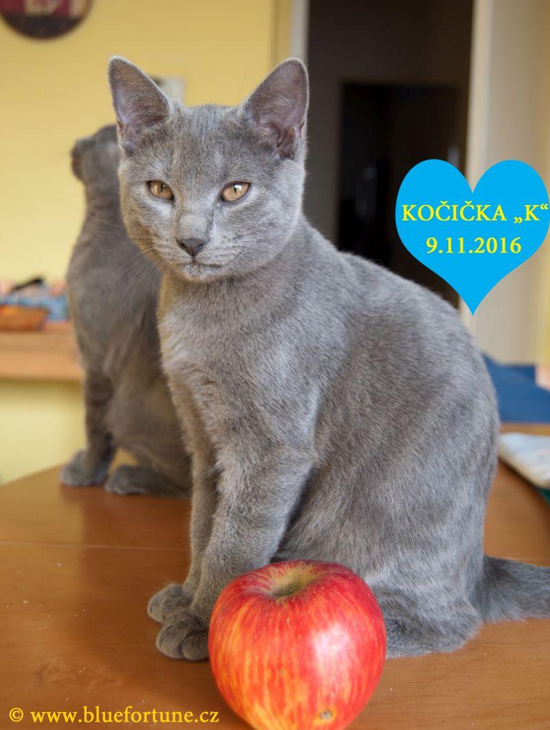 """Vrh """"K"""" Blue Fortune, CZ: kočička s jablíčkem."""