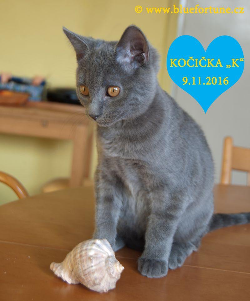 "Vrh ""K"" Blue Fortune, CZ: kočička s mušličkou."