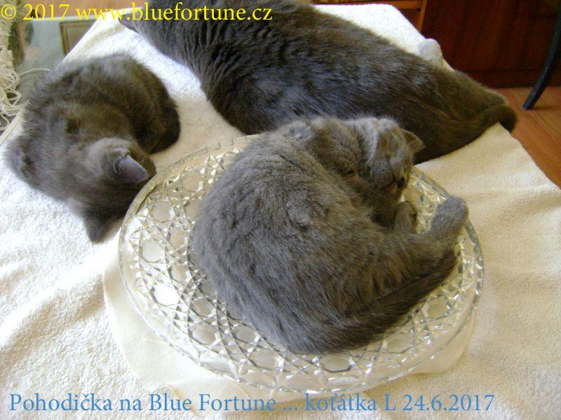 1 Pohodička na Blue Fortune.