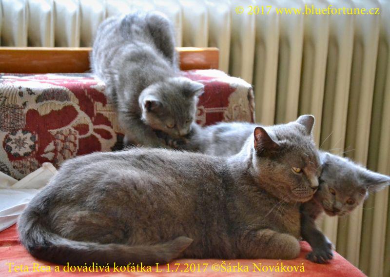 Teta Rea a dovádivá koťátka L...