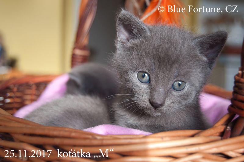 """Jsem z """"EMKA"""" na Blue Fortune."""