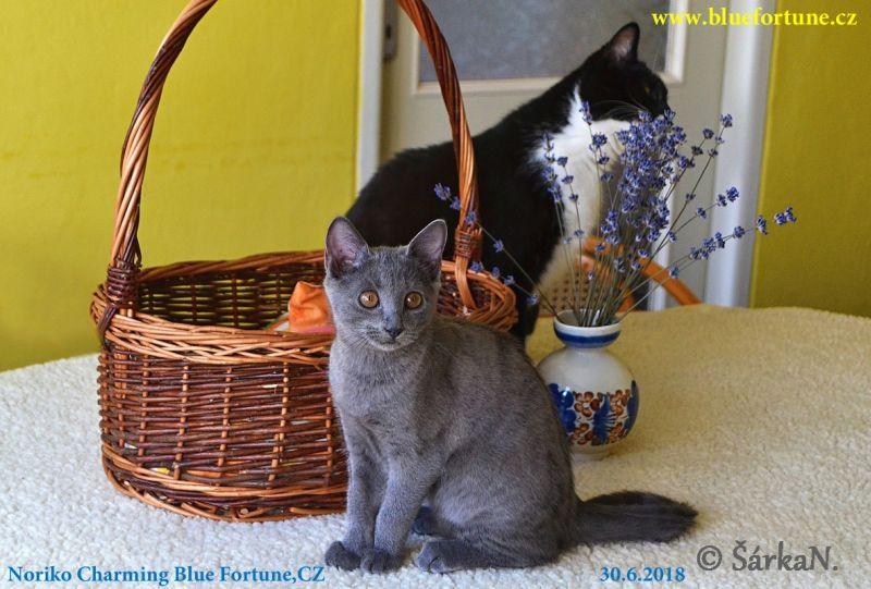 Noriko Charming Blue Fortune, CZ
