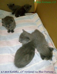 Tři kocourci a dvě kočičky vrh O.