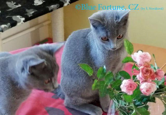 Galérie z focení Ofélie a Orchidey Blue Fortune, CZ CZ 26.10.2019