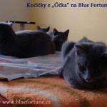 """Tři holky z vrhu """"O"""" k večeru na Blue Fortune, CZ"""