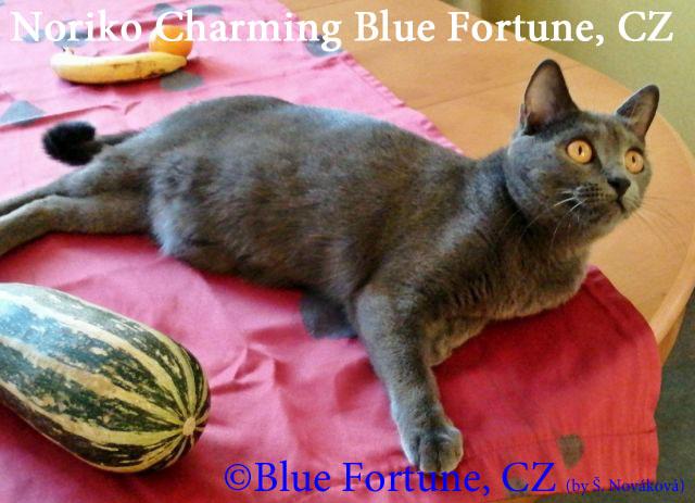 Noriko Charming Blue Fortune CZ 26_10_2019 rew