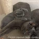 Odpočinek, Noriko a koťátko z vrhu P rew