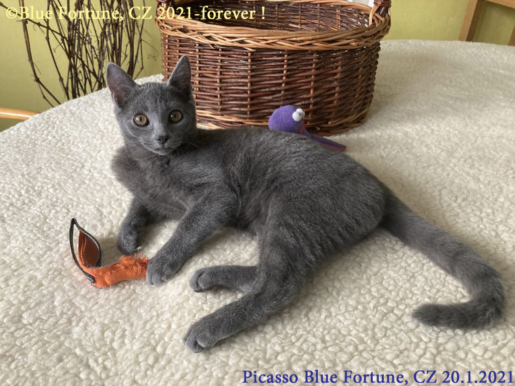 Picasso Blue Fortune, CZ
