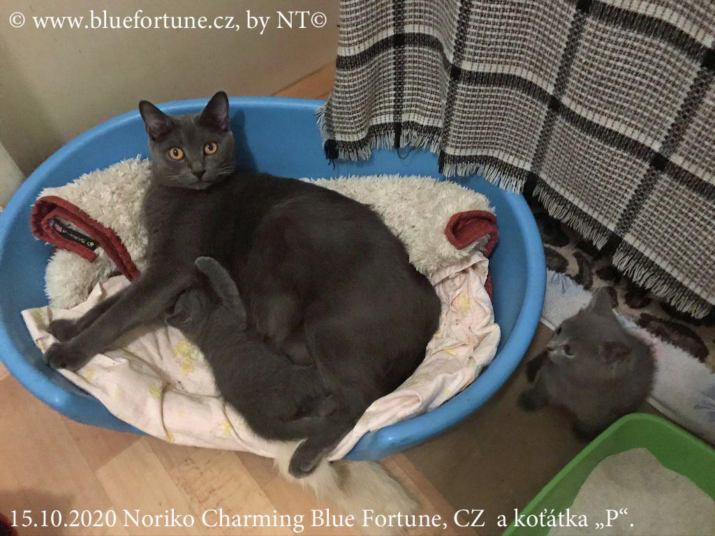 Noriko a koťátka poblíž prvního domova koťátek: velké porodní krabice...